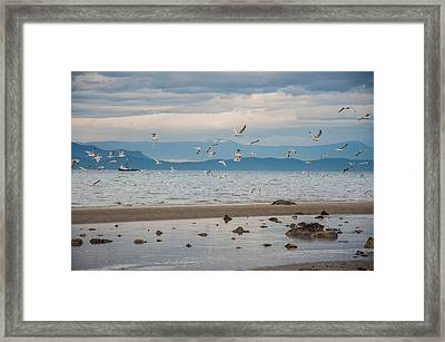 Herring Season  Framed Print