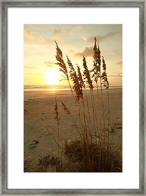 Low Tide Framed Print by Jose Rodriguez