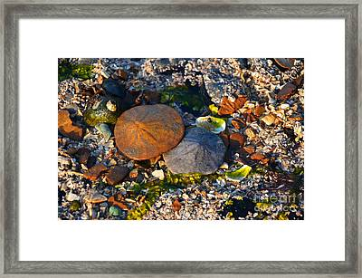 Low Tide Lovers Framed Print