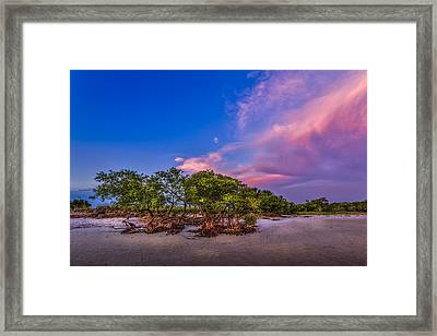 Low Tide Mangrove Framed Print