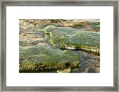Framed Print featuring the photograph Low Water Algae by Lena Wilhite
