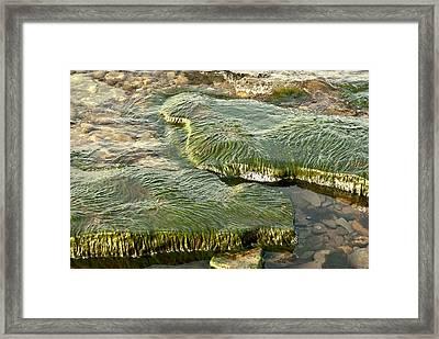 Low Water Algae Framed Print