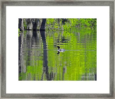 Lowcountry Loon Framed Print by Al Powell Photography USA