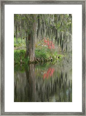 Lowcountry Series I Framed Print