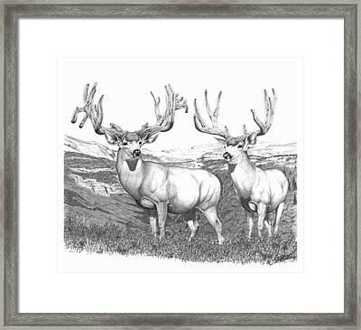 Lowe Buck Framed Print