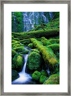Lower Proxy Falls Framed Print by Inge Johnsson