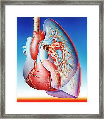 Lower Respiratory Tract Infection Framed Print by John Bavosi