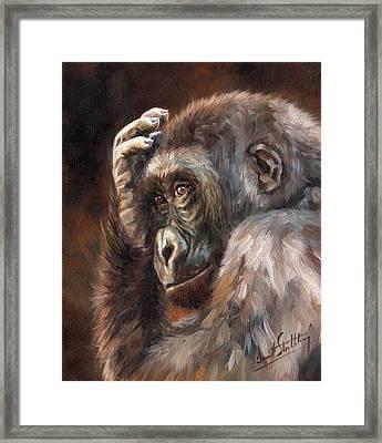 Lowland Gorilla Framed Print by David Stribbling