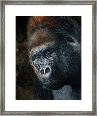 Lowland Gorilla Painting Framed Print by David Stribbling