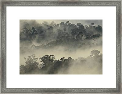 Lowland Primary Forest At Sunrise Framed Print by Ch'ien Lee