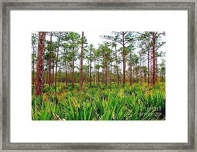 Loxahatchee Framed Print by Carey Chen