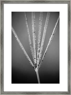 Loxahatchee Grass Framed Print by Bradley R Youngberg
