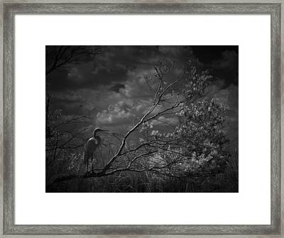 Loxahatchee Heron At Sunset Framed Print