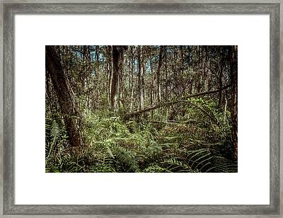 Loxahatchee Refuge-1 Framed Print by Rudy Umans