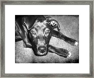 Loyal Friend Framed Print by Shawna Rowe