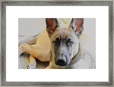 Loyal Love Framed Print