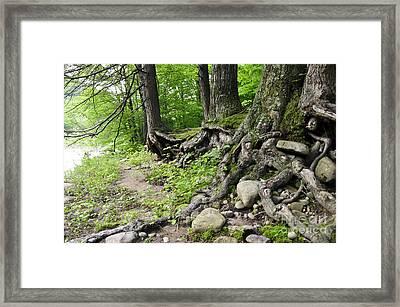 Loyalsock 3 Framed Print by Doug Heavlow