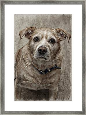 Framed Print featuring the photograph Loyalty  by Aaron Berg