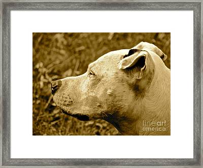 Loyalty And Strength Framed Print by Q's House of Art ArtandFinePhotography