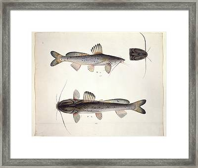 Ls Plate 164: John Reeves Collection Framed Print