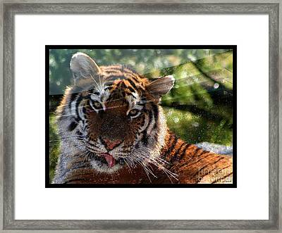 Lsu - Sorry Was That Your Quarterback? Framed Print