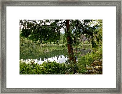 Lush Green At Starvation Lake Framed Print