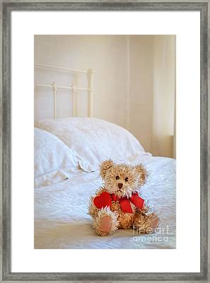 Lttle Bear Framed Print by Amanda Elwell