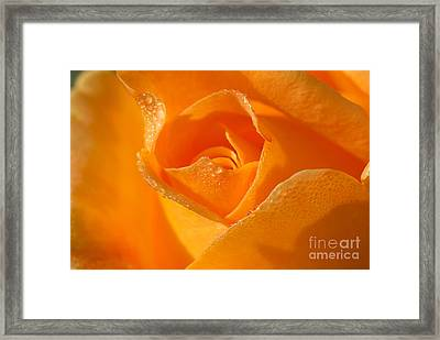 Lucille's Rose Framed Print