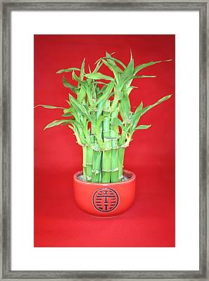 Luck Bamboo Framed Print