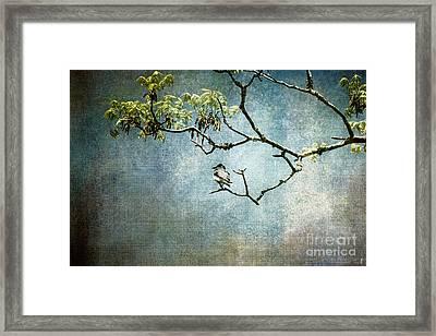 Lucky Bird Framed Print by Jai Johnson