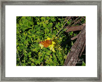 Lucky Framed Print by Drew Shourd
