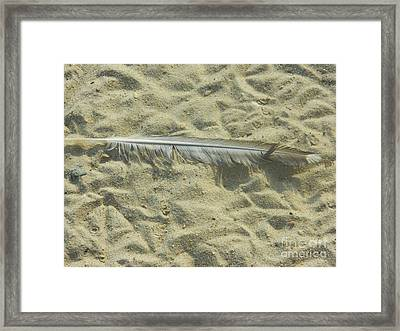 Framed Print featuring the photograph Lucky Feather by Emmy Marie Vickers