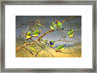 Lucky Seven - Gouldian Finches Framed Print by Frances McMahon