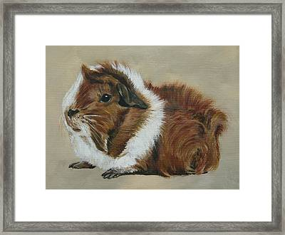 Lucky The Cutest Guinea Pig Framed Print