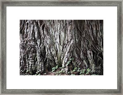 Lucky Tree Framed Print by Amanda Barcon
