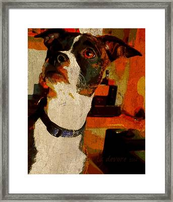 Lucy 7 Framed Print by Tg Devore