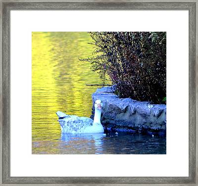 Framed Print featuring the photograph Lucy by Deena Stoddard
