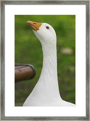 Framed Print featuring the photograph Lucy Goose 2  by Naomi Burgess