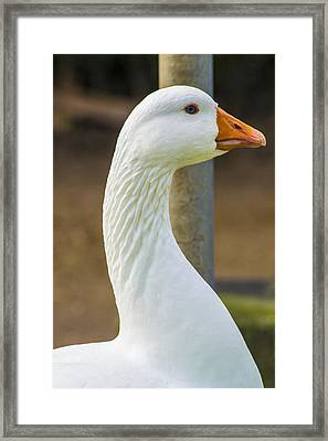 Framed Print featuring the photograph Lucy Goose by Naomi Burgess