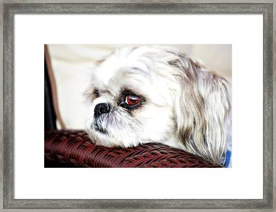 Lucy Framed Print by Molly McPherson
