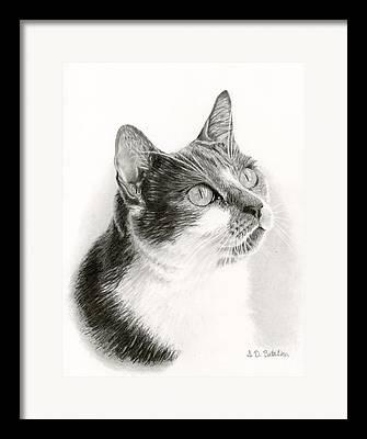 Domestic Pet Portraits.house Cat Framed Prints