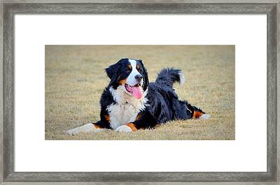 Lulu All Grown Up Framed Print