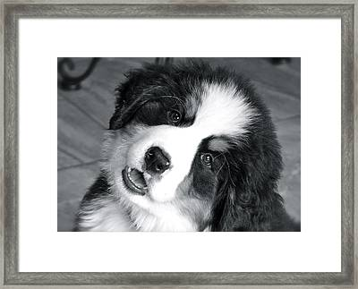 Framed Print featuring the photograph Lulu by Barbara Dudley