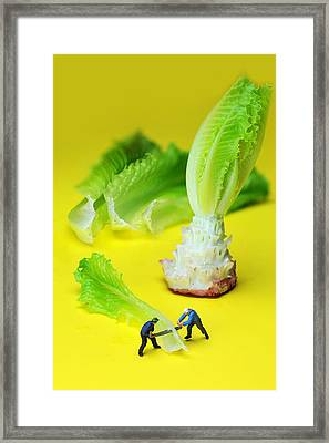 lumber workers cutting Lettuce little people on food Framed Print by Paul Ge