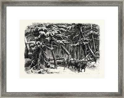 Lumbering In New Brunswick Framed Print by English School