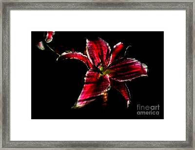 Framed Print featuring the photograph Luminet Darkness by Jessica Shelton