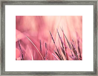 Luminis - S09c - Pink Framed Print by Variance Collections