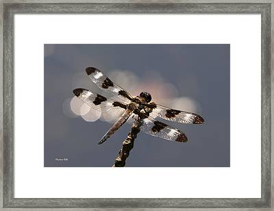 Luminous Dragonfly Framed Print by Christina Rollo
