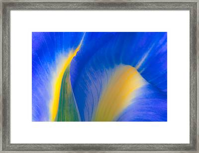 Luminous Framed Print by Joan Herwig