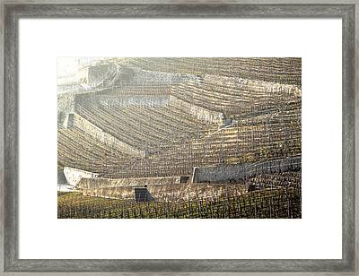 Luminous Lavaux Vineyards  Framed Print